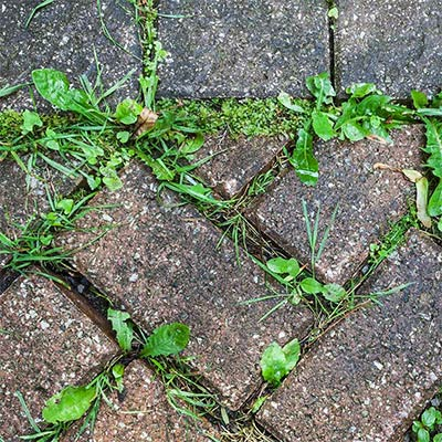 Clean Cracks and Crevices. Spot Treat Weeds Today.