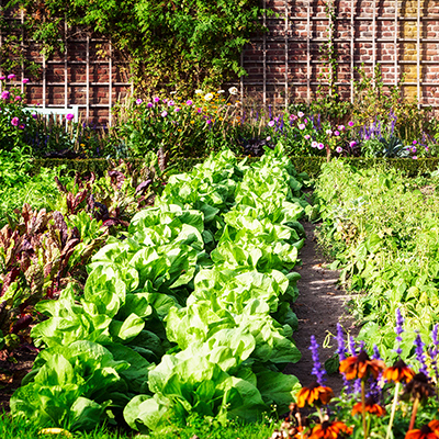 Vegetables in a summer garden