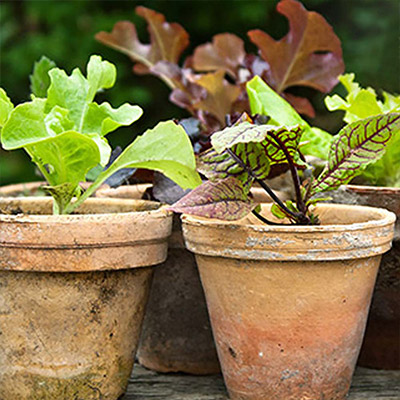Create Stunning Containers with Edibles
