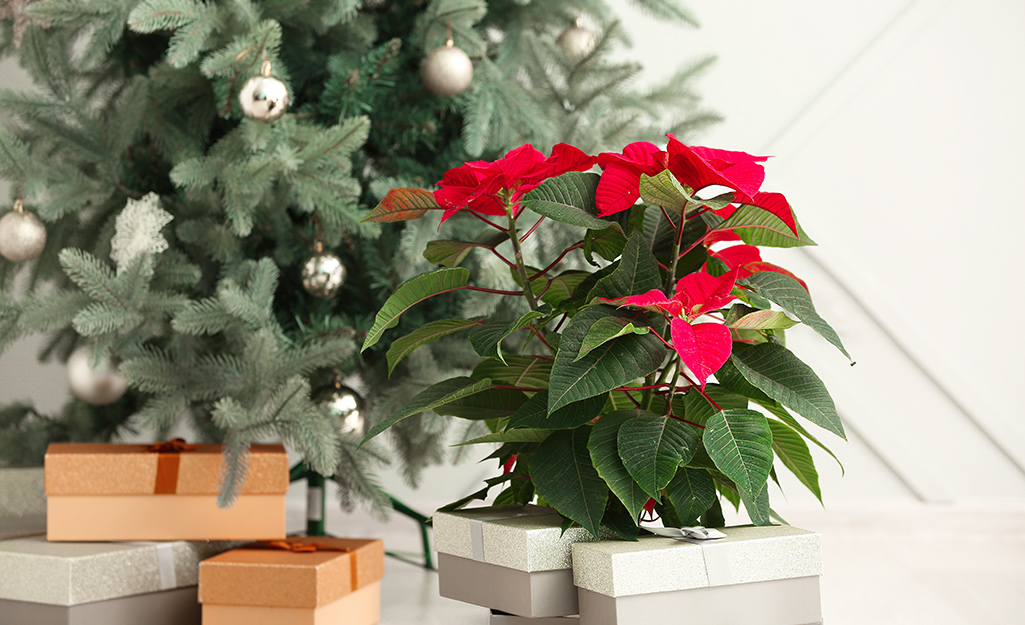 6 Easy Ways To Decorate With Poinsettias The Home Depot