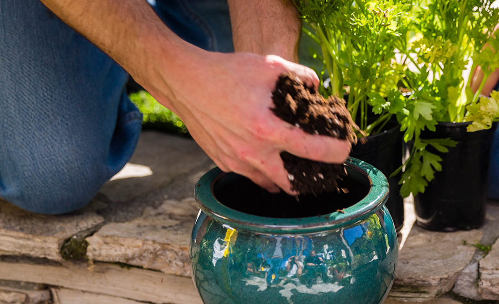 Fill Container With the Right Soil
