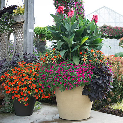 Discover 6 Low-Maintenance Tips for Gardening in Containers