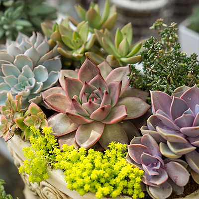 Display Succulents in Style