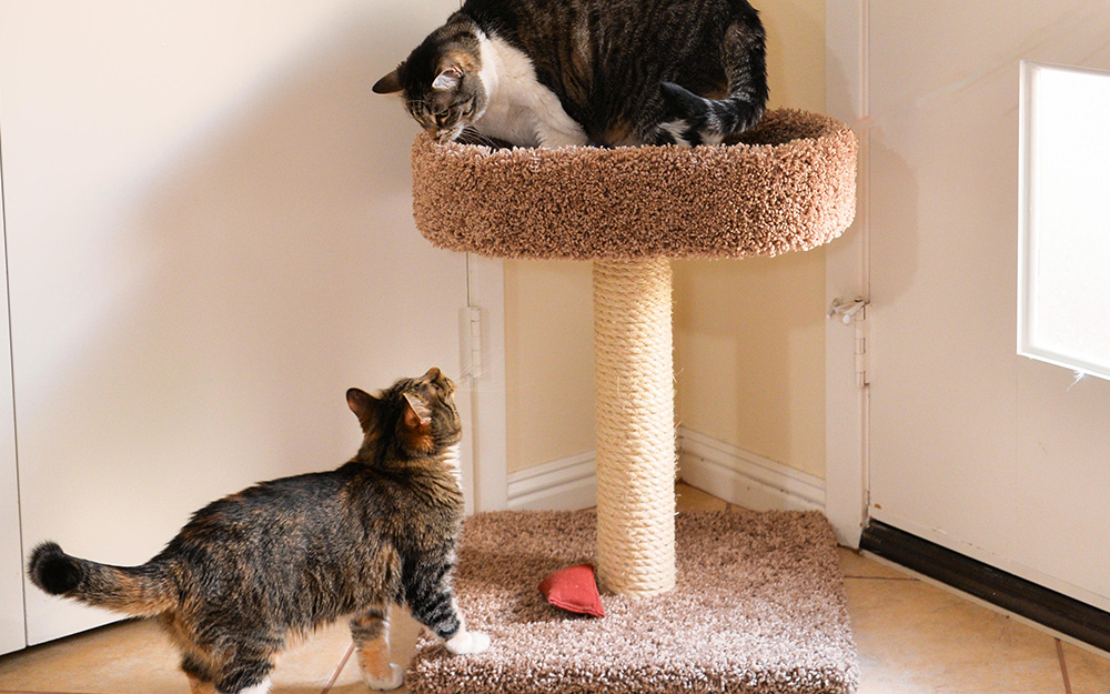 Diy Cat Tree The Home Depot