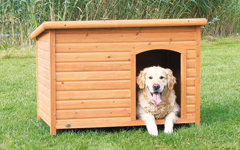 A dog resting in the doorway of a dog house.