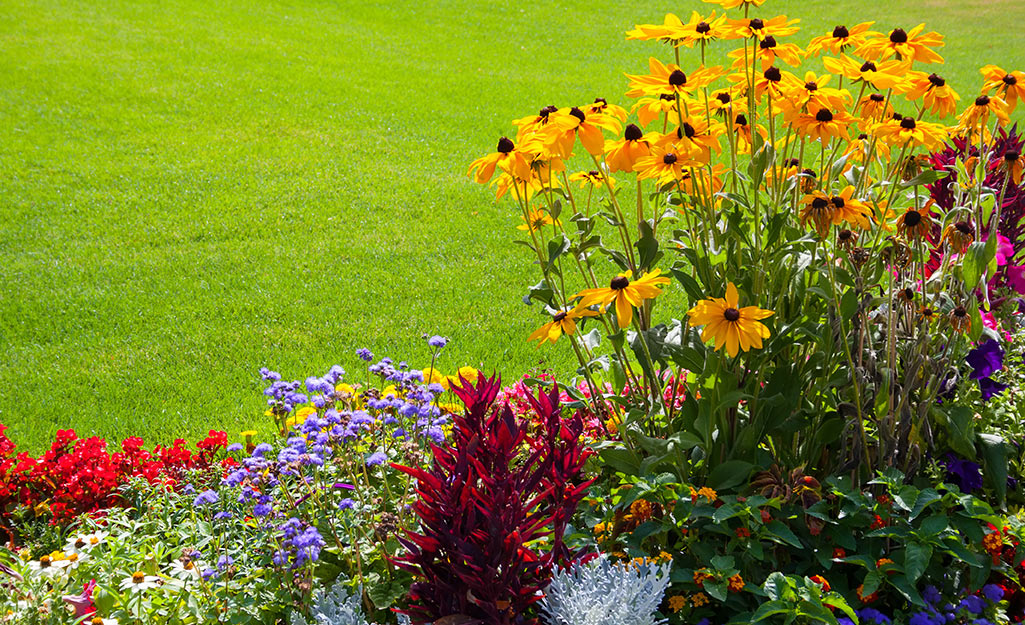 A sunny flower bed with rudbeckia and other flowers.