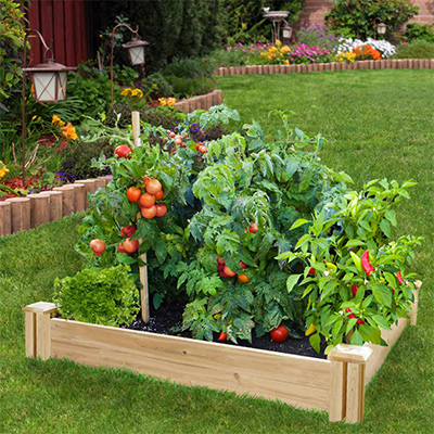 Do's and Don'ts for Your Raised Garden Bed