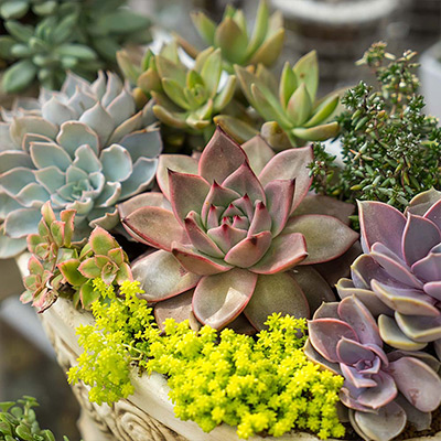 Drop and Grow Succulent and Flower Containers