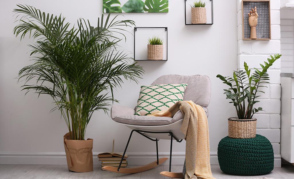 Các loại cây xanh trong trang trí phòng màu trắng.