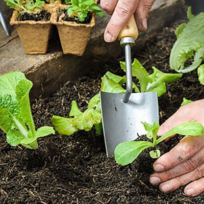 Eat Your Greens! Start a Fall Salad Garden Now.