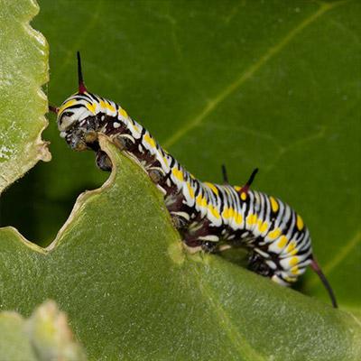 effectively-manage-bad-bugs-organically