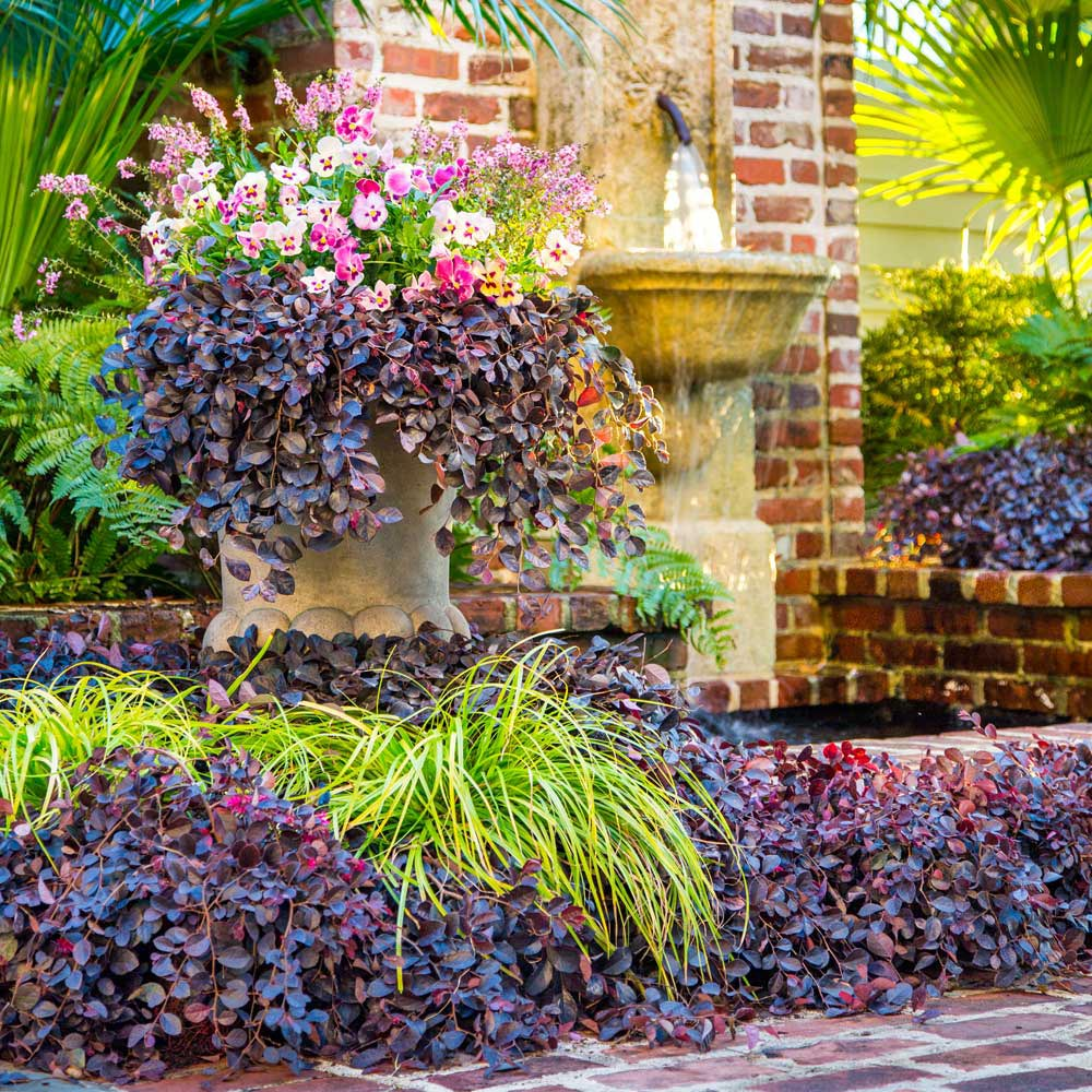 Enjoy These Blooming Shrubs for Year-Round Interest