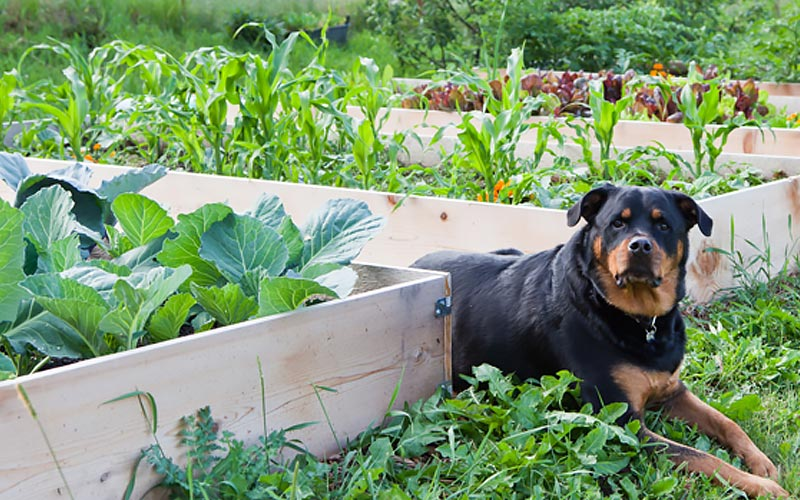 What to Grow in a Raised Garden Bed