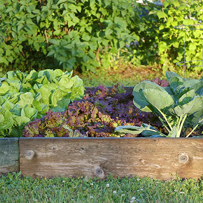 Everything You Need to Know About Raised Garden Beds