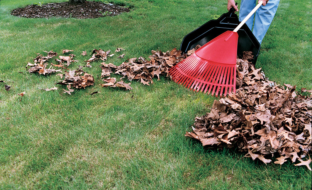 Person raking leaves on a lawn.