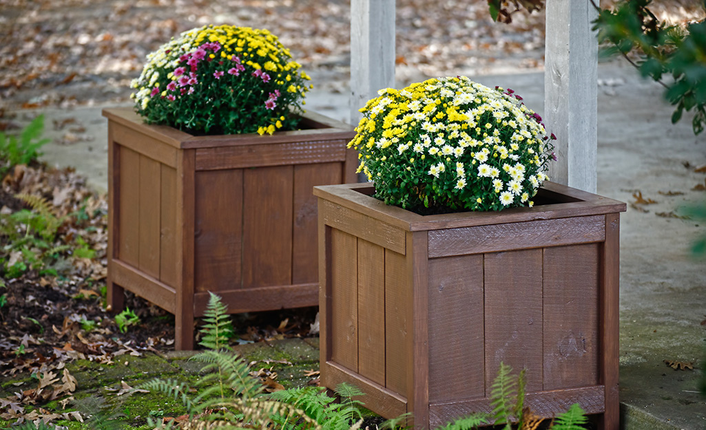 Yellow and purple mums in wood containers