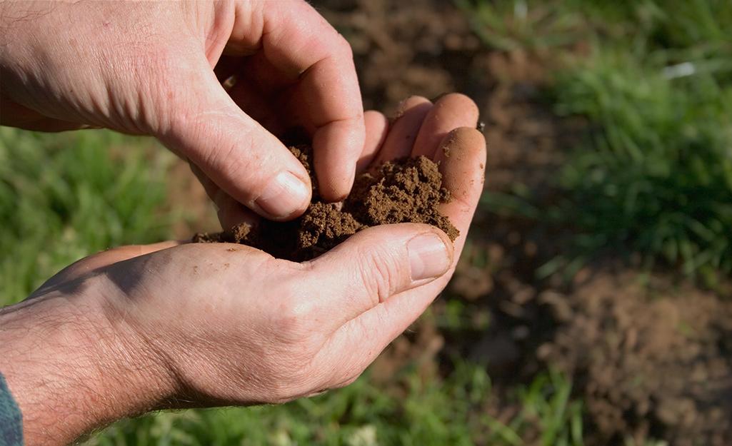 Gardener's hand filled with soil