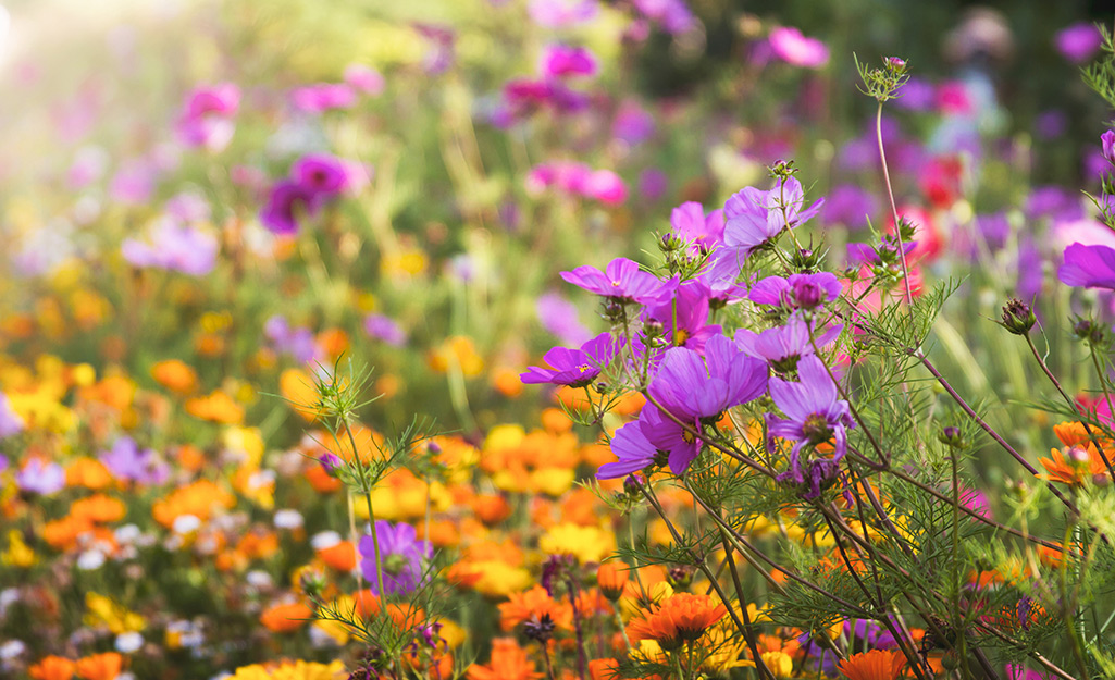 Colorful wildflowers in a meadow