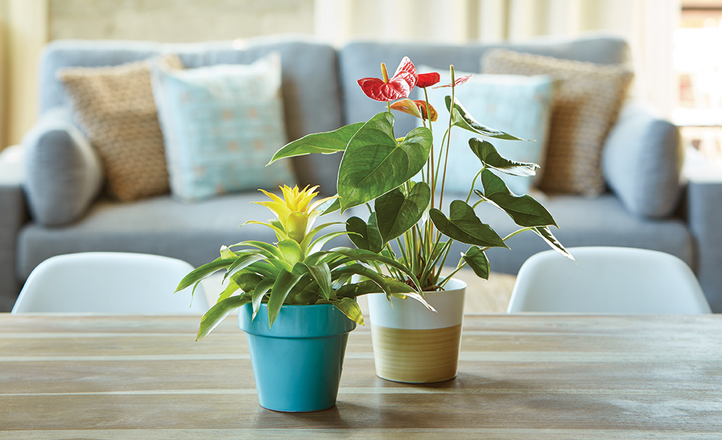 Tropical houseplants on a table