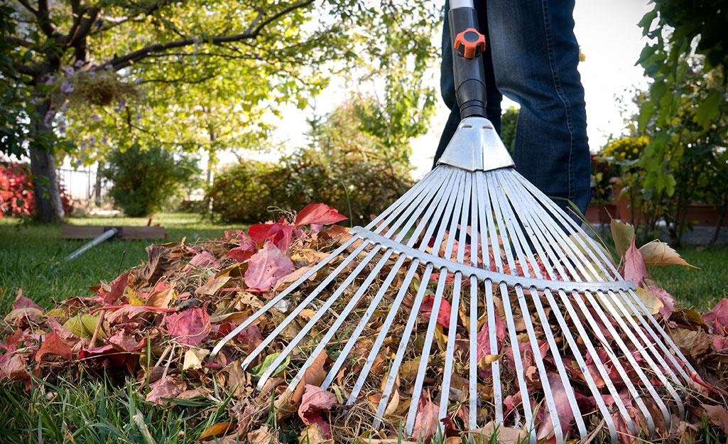 Person raking fall leaves