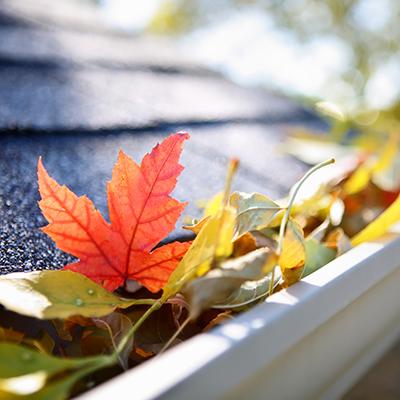 Fall leaves in a gutter
