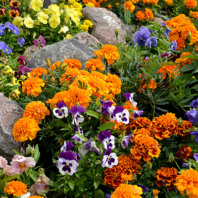 Fall Plant and Flower Ideas