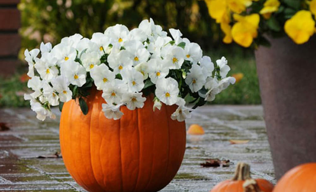 A pumpkin being used as a planter.