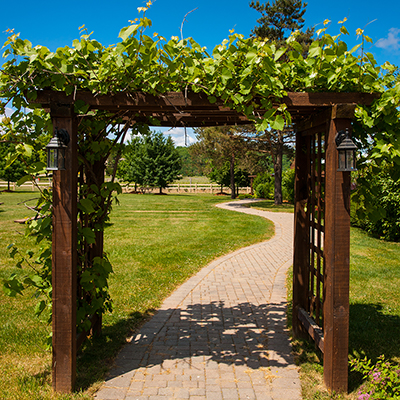 Fast Growing Vines for Shade