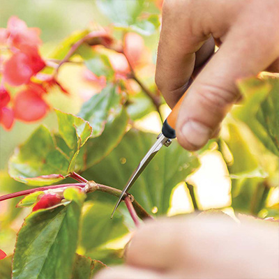 Feed and Trim Flowers Today for More Summer Color