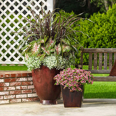 Fill Bare Spots with Containers