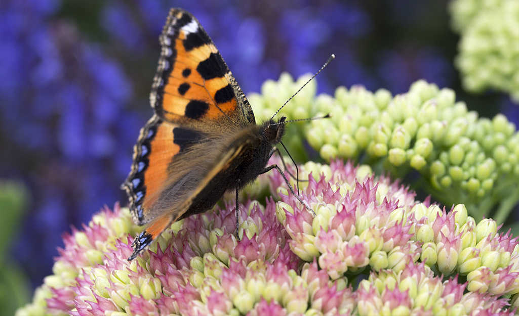 Please Pollinators