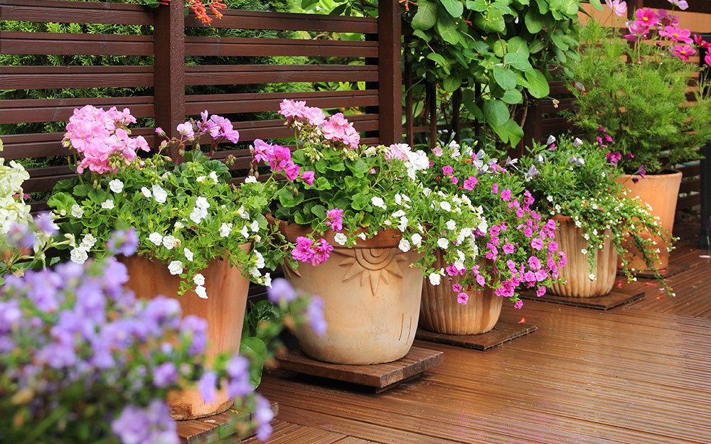 Flowers in containers on a deck.