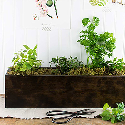 Fresh Taste: DIY Herb Box