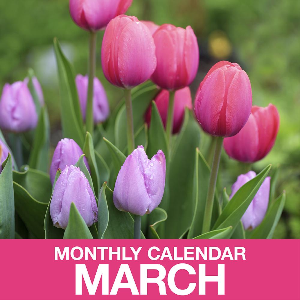 Gardening Calendar for March