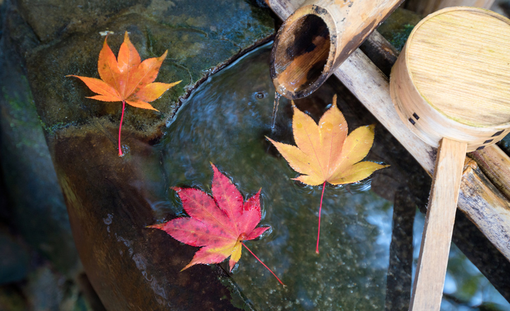 Japanese maple leaves floating in water