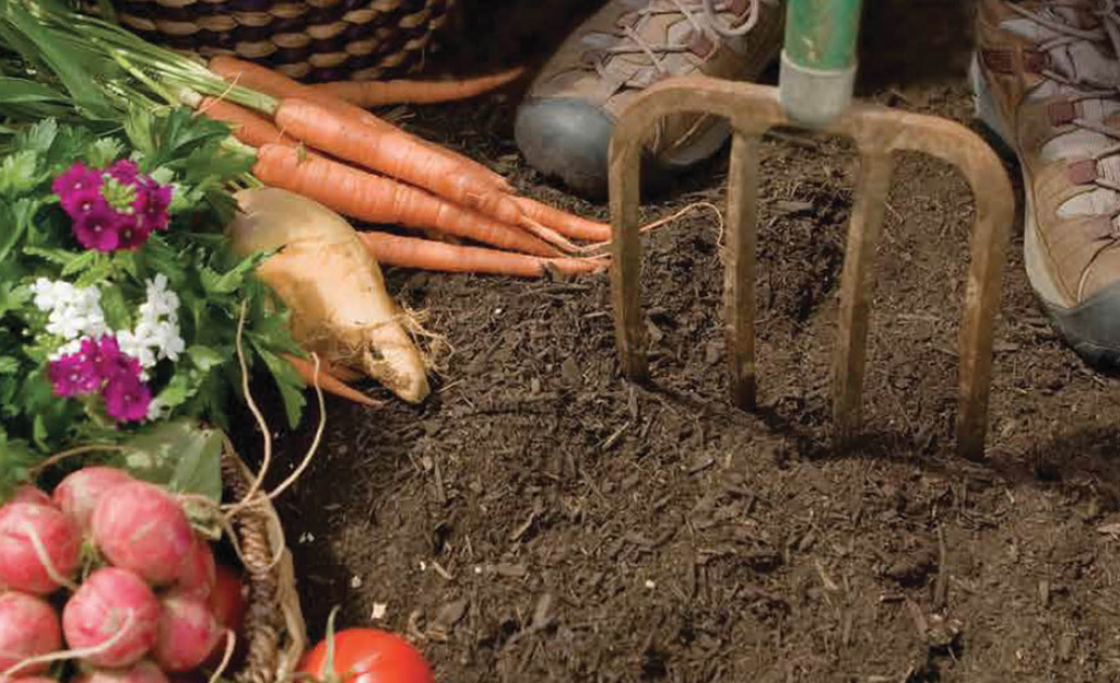 Person using a digging fork in soil with vegetables
