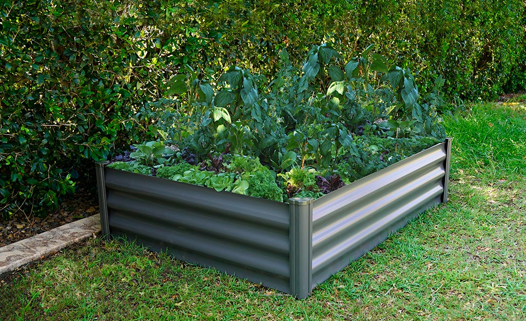 A raised garden bed filled with fresh edibles