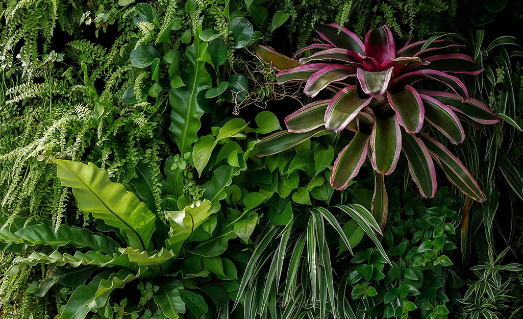 Vertical plant wall with green tropical plants