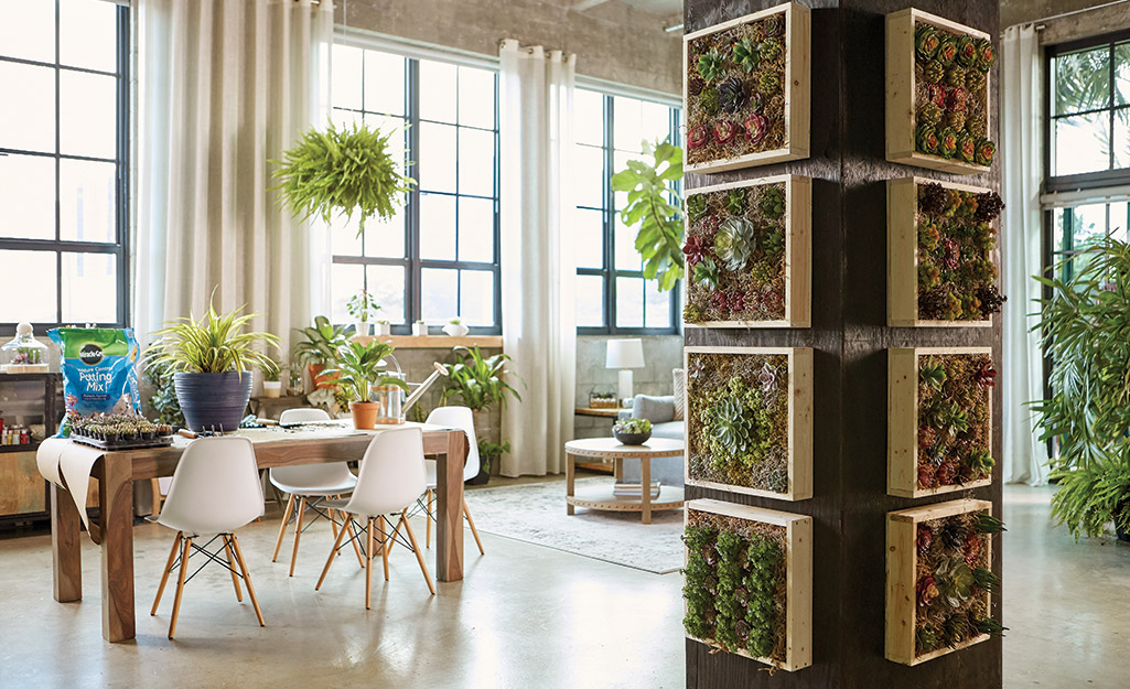 Interior space with succulent wall