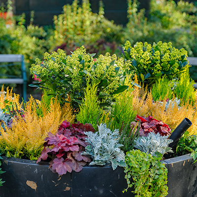 Fall annuals and perennials in a container