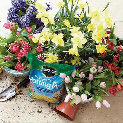 How to Get Instant Spring Color in Containers