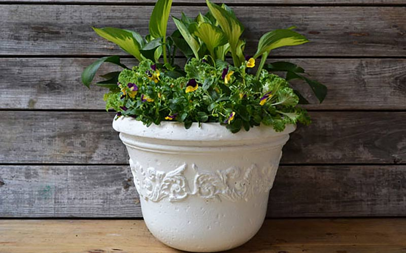 Plant a Mixed Container with Hostas