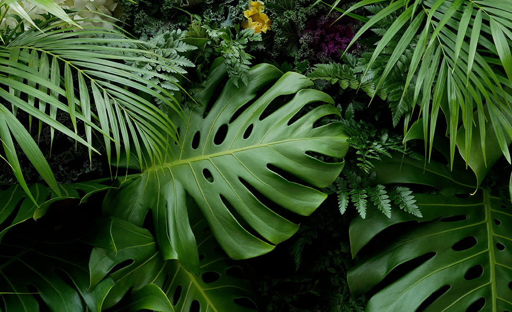 Grow a Tropical Garden in Your Backyard
