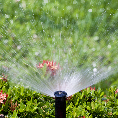 Get to the Root of It: Water Deeply Today with Irrigation Systems That Save Money Forever