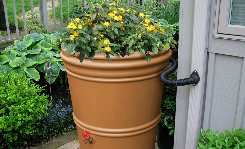 Rain barrel with flowers