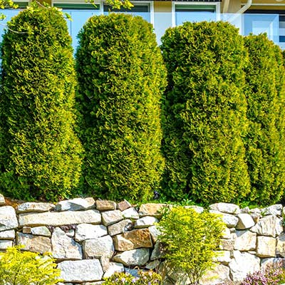 Go Green with Evergreen Fences