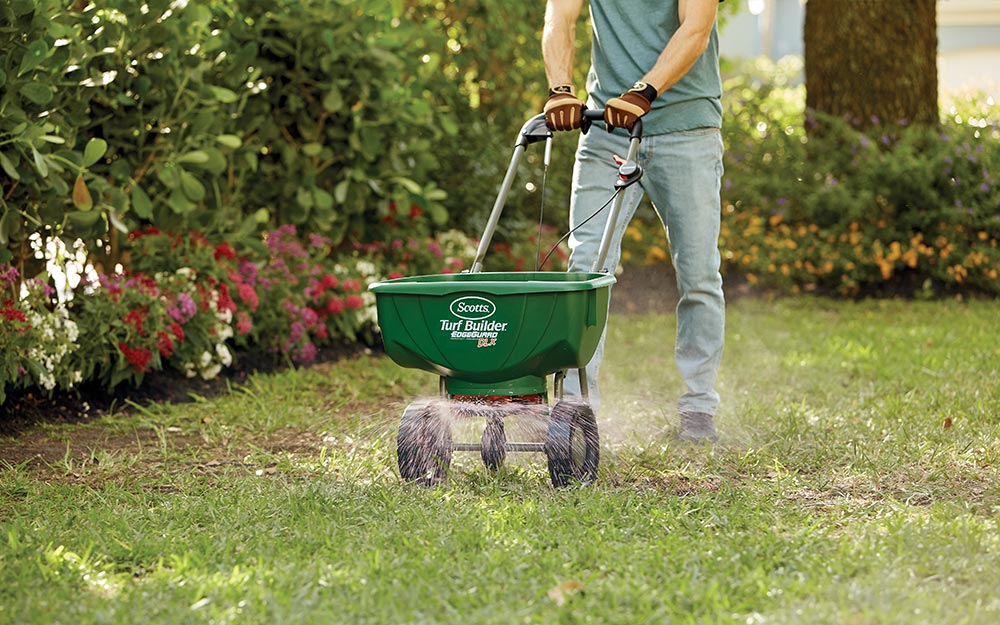 Man pushing grass seed spreader over a lawn.