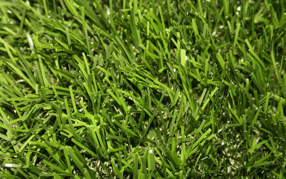 Centipede grass.