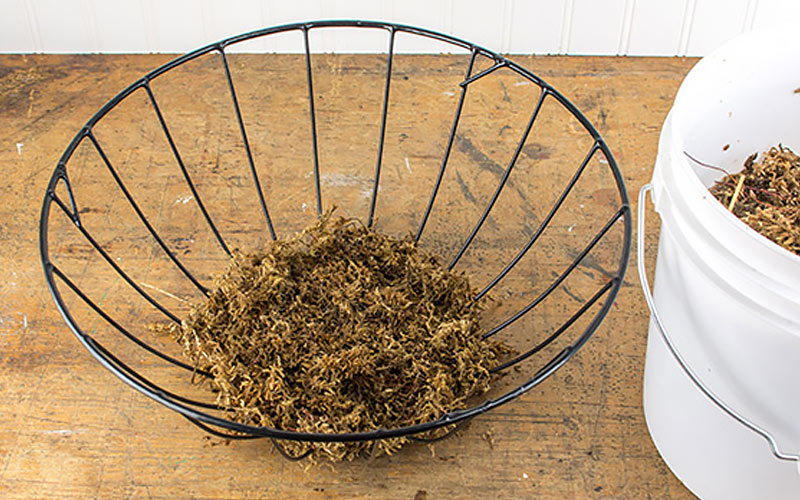 Metal hanging basket with sphagnum moss