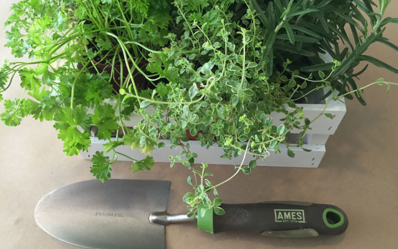 Grow These Herbs in Your Indoor Garden